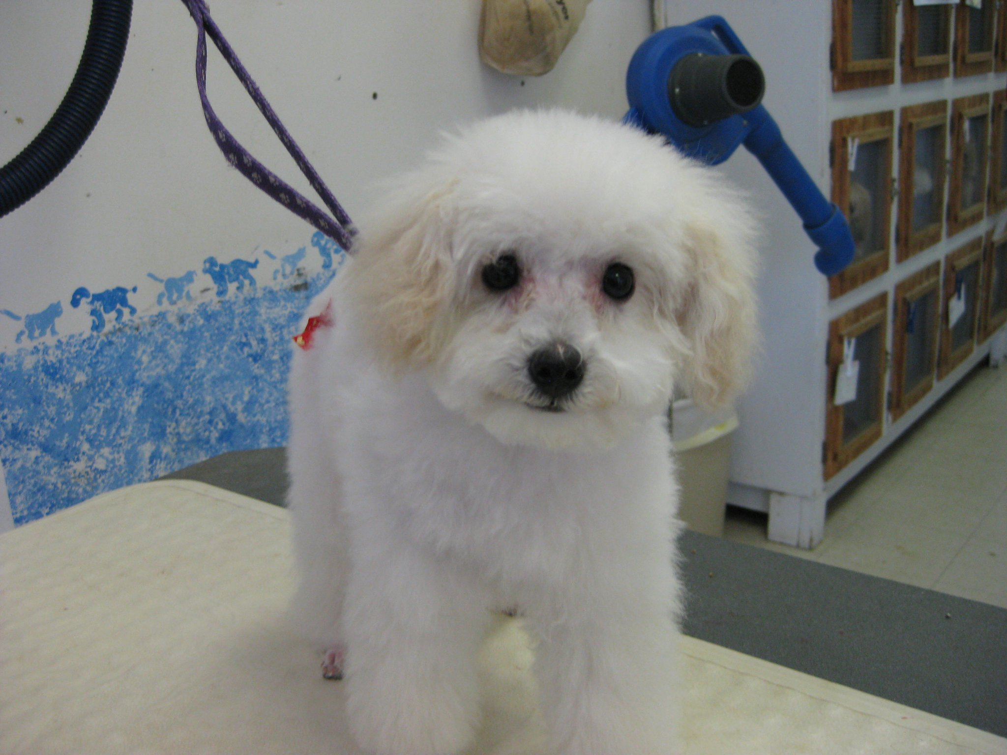 Additional Services Blue Collar Pet Salon And Self Serve Pet Wash